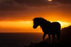 Одичалый пони Welsh Стоковое Изображение RF
