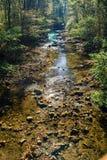 Одичалый поток форели горы стоковое фото rf