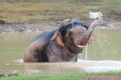 Одичалый слон играя воду Стоковое Изображение RF