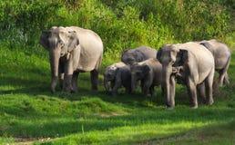 Одичалый слон Стоковые Фотографии RF