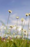 Одичалый цветок стоковое фото rf