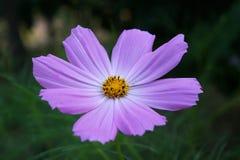 Одичалый цветок Стоковые Изображения RF
