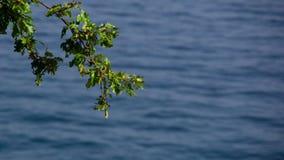 Одна ветвь с зелеными листьями Стоковые Фото