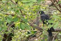 Одна ворона на ветви дерева Стоковые Фото