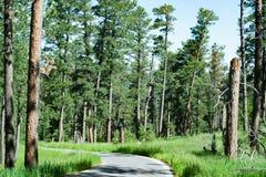 Одна дорога майны через Black Hills Южной Дакоты стоковые изображения rf