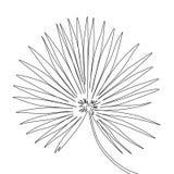 Одна линия лист ладони вентилятора чертежа r иллюстрация штока