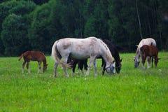 Одна лошадь и отцы smoll стоковое изображение