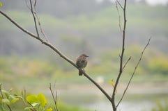 Одна маленькая птица на ветви дерева - зяблик или воробей Стоковые Изображения