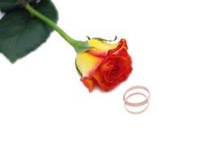 Одна роза и обручальные кольца Стоковое Изображение