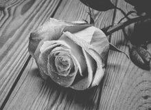 Одна роза пинка в падениях конца-вверх воды на деревянном столе стоковое фото rf