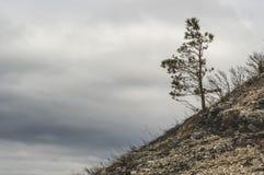 Одна сосна на горном склоне около гор Zhiguli Регион самары запаса стоковая фотография