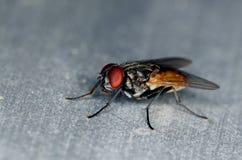 одна стойка мухы Стоковые Изображения RF