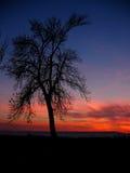 одна темнота Стоковые Фото