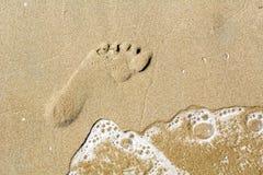 Одна трассировка на коричневом песке Стоковое Изображение