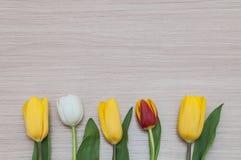 3 одних белых и одних красных тюльпана лож желтого цвета, в ряд на древесине Стоковые Изображения