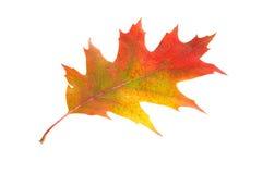 одни листья стоковое изображение rf