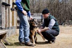 однолетнее ветеринарное посещение Стоковые Изображения RF
