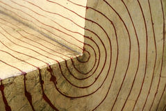 однолетнее кольцо Стоковая Фотография RF