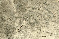 Однолетние кольца на пне дерева на белизне Стоковые Изображения RF