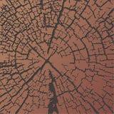 однолетние кольца текстурируют древесину Стоковая Фотография