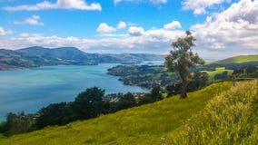 Одно дерево в Новой Зеландии стоковая фотография