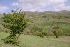 Одно дерево на красивой равнине, Иран, Gilan стоковое изображение