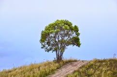 Одно дерево на холме Стоковые Изображения
