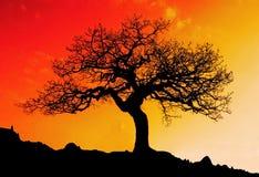 Одно дерево с солнцем и небом померанцового желтого цвета цвета красным стоковые изображения