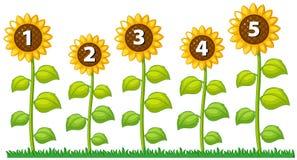 Одно до 5 на солнцецветах иллюстрация вектора