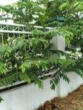 Одно из добросердечные деревья стоковые изображения rf