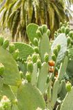 Одно из разнообразий кактусов Стоковая Фотография RF