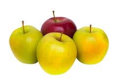 Одно красное яблоко и 3 желтых яблока Стоковая Фотография RF