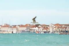 Одно летание чайки над волнистым морем в Vodice, Хорватии стоковое фото
