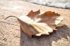 Одно разрешение на деревянном поле Стоковые Изображения RF