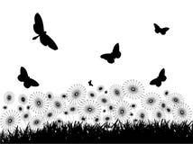 одуванчики бабочек Стоковая Фотография