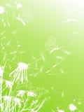 одуванчик бабочек предпосылки Иллюстрация штока