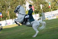 *** 10-ое августа 2014 Grand Prix CSIO-W в Братиславе, Словакии Стоковая Фотография