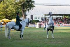 *** 10-ое августа 2014 Grand Prix CSIO-W в Братиславе, Словакии Стоковое Изображение