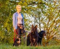 21-ое апреля 2018 - Wroclaw в Польше: Женщина с ее любимыми собаками в природе Стоковое Изображение RF