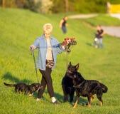 21-ое апреля 2018 - Wroclaw в Польше: Женщина с ее любимыми собаками в природе Стоковое Изображение