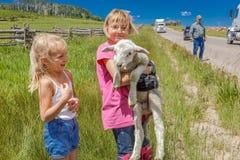17-ое июля 2016 - маленькая девочка держит овец на мезе Hastings около Ridgway, Колорадо от тележки Стоковые Изображения