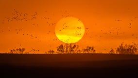 8-ое марта 2017 - птица воды грандиозного острова, Небраски - РЕКИ PLATTE, СОЕДИНЕННЫХ ШТАТОВ прилетные и краны Sandhill на их ве Стоковое Изображение