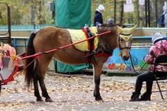13-ое октября 2018 Россия, Izhevsk Лошадь, который будут ехать дети в парке стоковая фотография rf