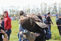 16-ое сентября 2017, Тула, Россия - историческое ` поля Kulikovo ` фестиваля: орел сидя на перчатке falconry Стоковое Изображение