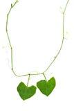 Ожерелье сердца природы Стоковые Фото