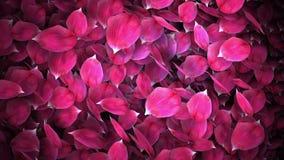 Оживленный переход лепестков розы иллюстрация вектора