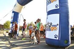 Ожидание собак для старта гонки Стоковые Фотографии RF