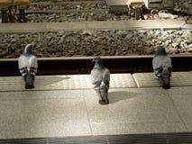Ожидать поезда Стоковые Фотографии RF