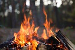 Ожога огня лагеря стоковое изображение
