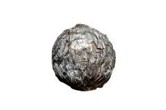 Ожогы кокоса стоковые изображения